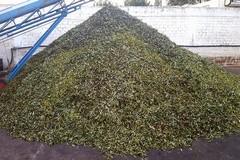 Il prezzo delle olive è al minino storico
