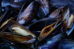 Mari bollenti: strage di cozze a Taranto