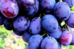 Produzione energetica nella filiera vitivinicola