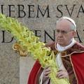 Domenica delle Palme : Ramoscelli di olivo pugliesi in Piazza San Pietro