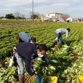 Agricoltura: investimenti in materia di salute e sicurezza sul lavoro