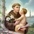 Un giglio per Sant'Antonio