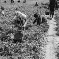 """Ai nostri contadini:  """"La preghìre du zappatàure """""""