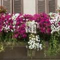 """Canosa:  """"Un fiore per il BORGO """""""