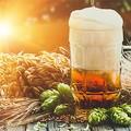 La birra agricola piace sempre di più