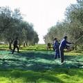 Un fallimento la gestione del PSR Puglia
