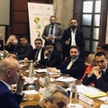 """Filiera olio:  """"Tra 12 mesi frantoi chiusi e occupazione azzerata """""""