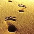 Impronte di vacanze a Margherita di Savoia