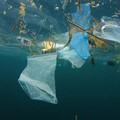 Plastica : la  gloria di ieri, l'inquinamento di oggi