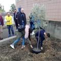 Festa degli alberi nelle scuole