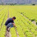 Agricoltura sociale: spinta su Agriwelness in  Puglia