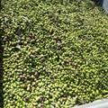 I bassi prezzi delle olive
