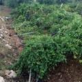 Sicurezza nelle aree agricole della provincia BAT