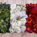 Fiori e piante tricolore aiutano a vincere la paura