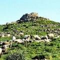 Addio a oltre 30mila pecore in 15 anni