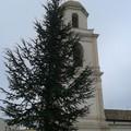Un albero di Natale  in Piazza Vittorio Veneto