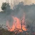 Incendio sulle rive dell'Ofanto