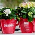 """""""Bentornata Gardensia""""  per sostenere la ricerca sulla sclerosi multipla"""