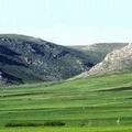Boschi in Puglia: maggiori investimenti per la ricostituzione, la cura e la tutela
