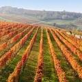 La produzione energetica nella filiera vitivinicola