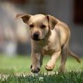 A Canosa un percorso educativo di gruppo con i cani
