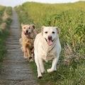 Puglia: vacanze pet friendly negli  agriturismi