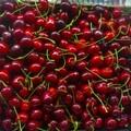 Ciliegie: Crollo verticale prezzi in campagna