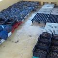 Grosso sequestro di prodotti ittici