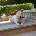 Ritrovato il cagnolino Lulù