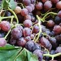 Frutta con effetto relax contro stress da rientro vacanze