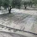Maltempo:  si fa la conta dei danni nelle campagne