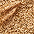 Origine del grano su etichetta pasta