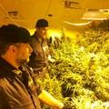 Appartamento adibito a serra per marijuana