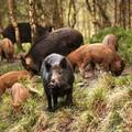 Fauna selvatica: legge regionale per indennizzi danni