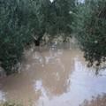 Maltempo: campi allagati, danni alle colture