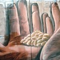 Mani di grano di PISKV