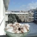 Neve e vino cotto