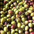 """""""Taste Europe """": 65 borse di studio per tirocini nel settore agroalimentare"""