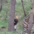 Parco Naturale Selva Reale è lieta di presentare l'Elfo Postino e le letterine di Natale
