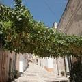 L'uva sultanina di Vico Doge Mocenigo e il vino novello per l'estate di San Martino