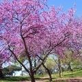 Marzo, benvenuta primavera