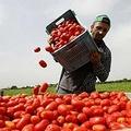 Spezzare la catena dello sfruttamento in agricoltura