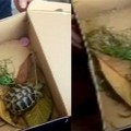 Sequestrata una tartaruga viva