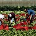 Serve la Rete del lavoro agricolo di qualità