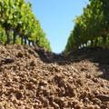 Il consumo suolo in Puglia è il piu' alto d'Italia