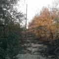 La piaga degli incendi :1300 ulivi in fumo