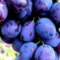 Prodotti vitivinicoli: in corso le vidimazioni dei documenti accompagnatori
