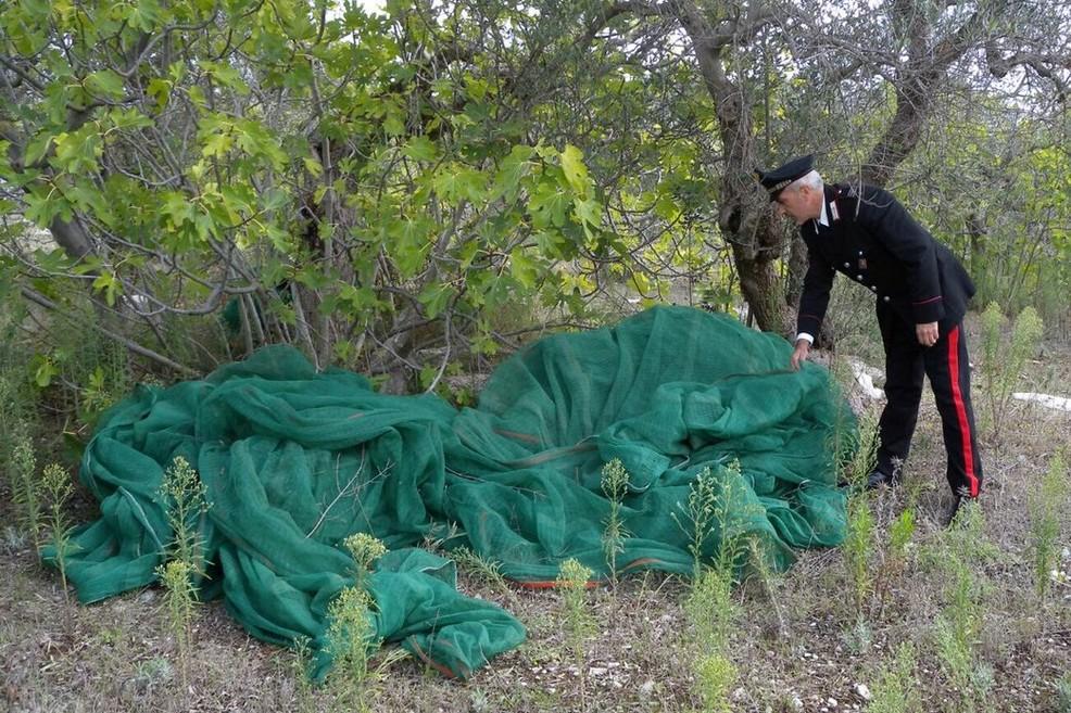 Carabinieri furti olive