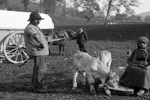Pastore e il gualano